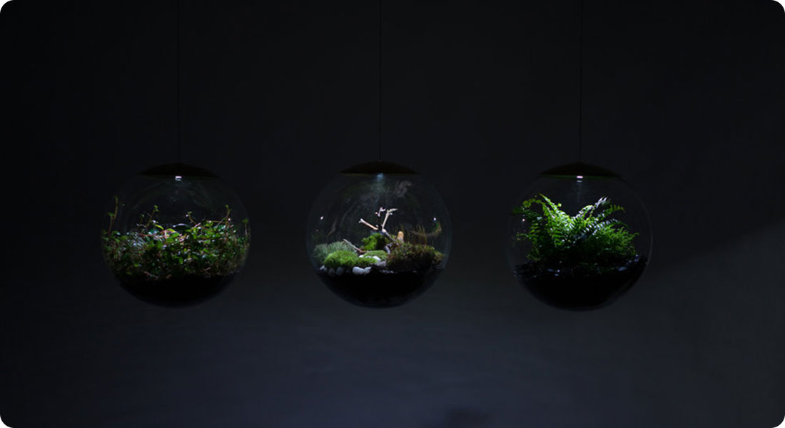 Bring a natural touch for your home thanks to these terrariums